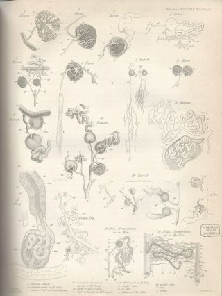 """BOWMAN'S CAPSULE: """"On the Structure and Use of the Malpighian Bodies of the Kidney, With Observations on the Circulation Through That Gland"""" (Philosophical Transactions of the Royal Society of London, Vol. 132 for the Year 1842 Part I & Part II, pp. 57-80)"""