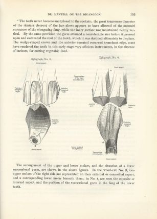 """STUDY OF DINOSAURS CONTINUES: """"On the Structure of the Jaws and Teeth of the Iguanodon"""" (Philosophical Transactions of the Royal Society of London, Vol. 138 for the Year 1848 Part I & Part II, pp. 183-202)"""